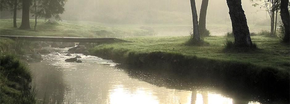 cropped-morning-mist-till-hemsidan.jpg