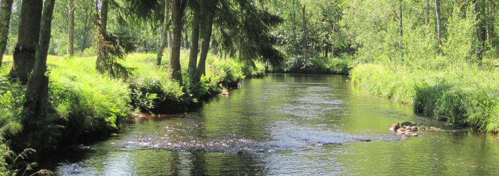sunny-river